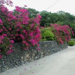 沖縄の風景-サンゴの石垣 竹富島