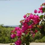 沖縄の風景-ブーゲンと海 瀬底島